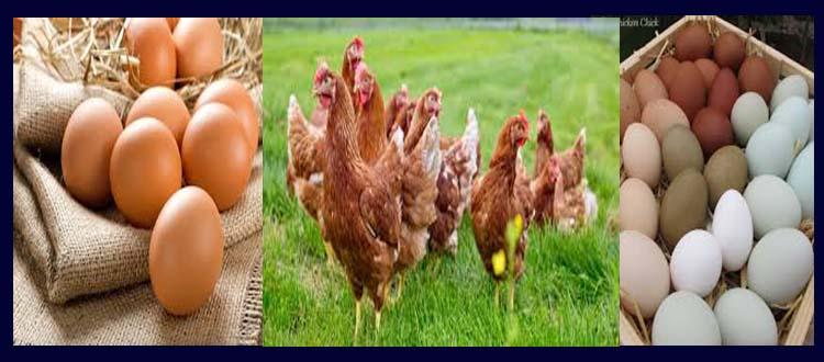 Health Benefits Of Free-Range Eggs