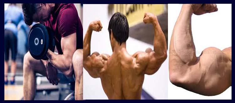 How long does it take for muscle growth
