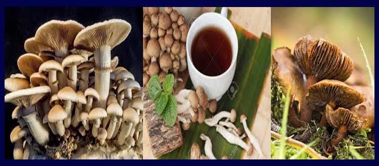 Mushroom Tea And Mushroom Tea Benefits